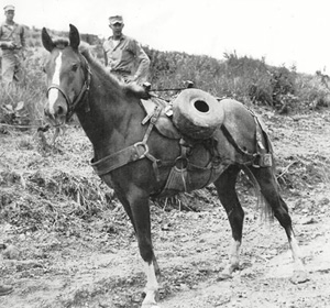 Reckless on duty during the Korean War.