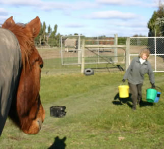 It's important that horse caregivers maintain a routine.