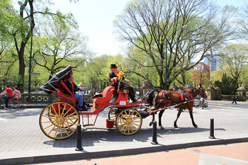 A carriage in New York's Central park. Photo: Ingfbruno/Wikipedia