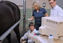 Can cryopreservation of equine stem cells work for cartilage repair?