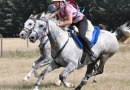 Sixty-one Endurance horses competing at qualifier 40km and 80km rides were used in the study in Portugal.