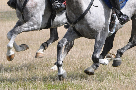Footing it with the best. Why did horses evolve to have only one toe on each foot?