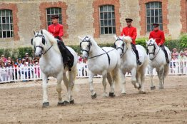 The magnificent percheron horses on parade.
