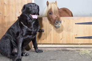 Acer at his cut-down stable door with best mate Demon the labrador.