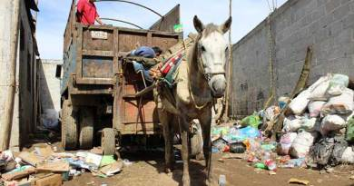 Working animals are crucial to the livelihood of millions of the world's poorest people. Photo: World Horse Welfare