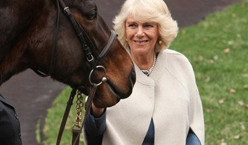 Camilla was aslo met by retired racehorses from the Secretariat Centre at the Kentucky Horse Park during the Brooke USA reception at Churchill Downs.