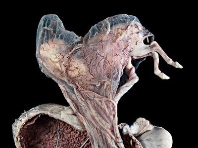 This image shows shows part of the central nervous system in a fruit fly (Drosophila melanogaster), photographed by Albert Cardrona.