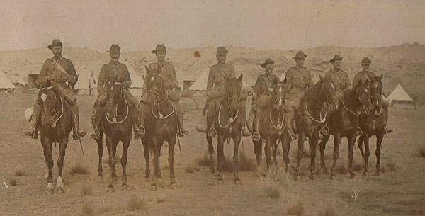 New Zealand horses at Gallipoli in 1919.