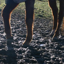 Graze Anatomy: Handling horses on a small acreage