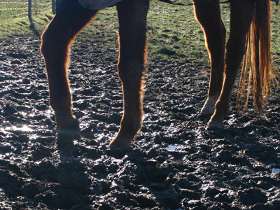 Sick of trudging through mud together with slush piece working alongside your horses Mud: Not together with then glorious for Equus caballus owners