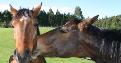 The US equine industry is showing signs of stability, a survey has indicated.