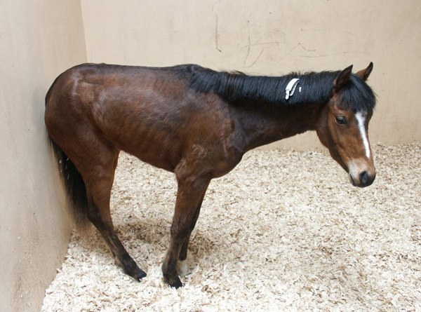 Equine grass sickness is a generally fatal multiple systems neuropathy of unknown cause in grazing horses.