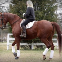 Beyond the half-halt: Moving forward with your horse