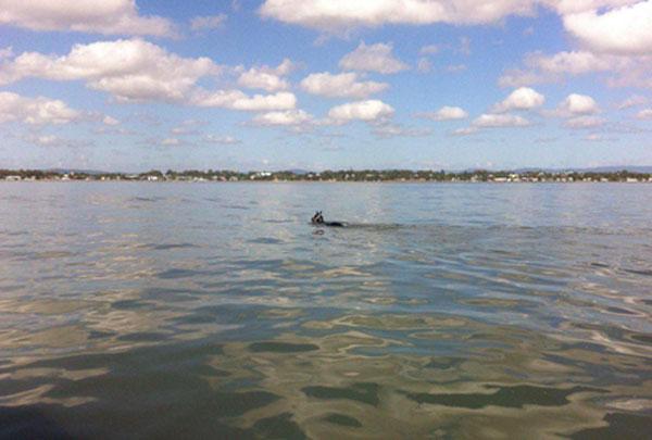 Rebel Rover makes his way in calm conditions. Photo: Volunter Marine Rescue Brisbane Inc/Facebook