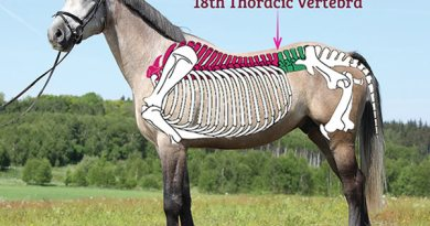 The saddle should sit in your horse's saddle support area, with the tree points behind the shoulder, and no further back than the 18th thoracic vertebrae.