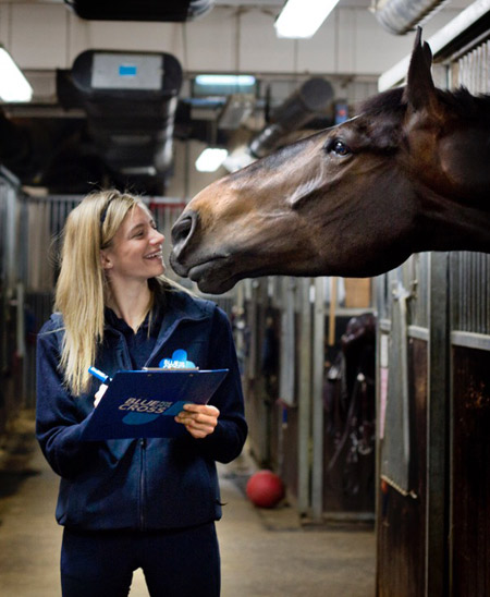 British horse owners are being urged to take part in this year's National Equine Health Survey.