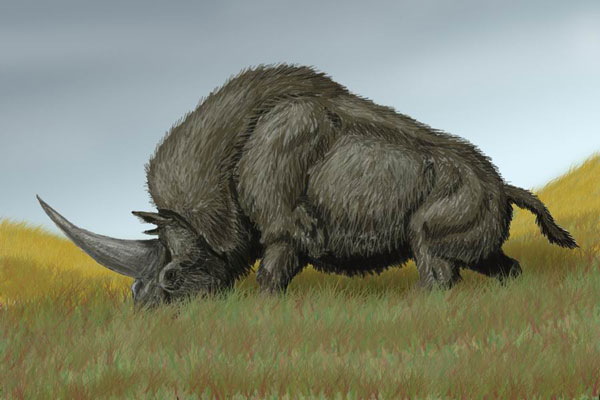 An artist's impression of Elasmotherium sibiricum. Photo: DiBgd via Wikipedia, CC-BY-SA-3.0 via Wikimedia Commons