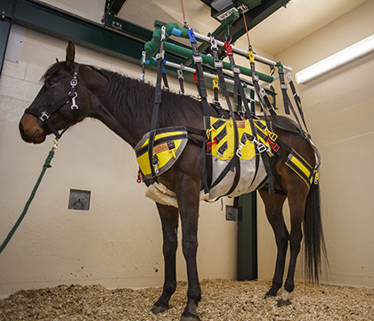 The robotic lift is designed to decrease painfor equine patients, shorten recovery time and reduce complications.