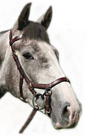 The Micklem Multibridle