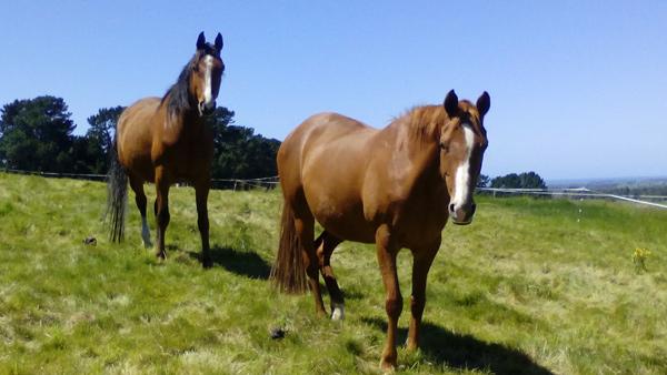 stock-chestnut-bay-grass