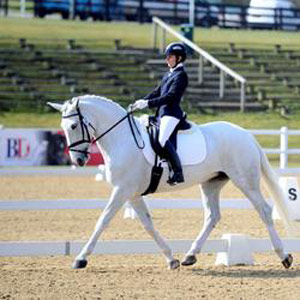 British Dressage has introduced a Draught Horse Championship series.