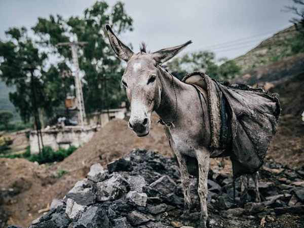 The OIE has approved new welfare standards for working horses, donkeys and mules around the world.