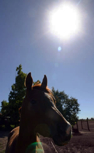 drought-sun