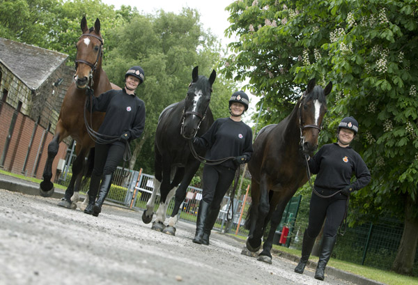 Dynamic trio of horses will now be kicking back in retirement. Photo: Greater Manchester Police