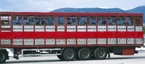 The charity World Horse Welfare has again highlight concerns around the long haul transportation of horses to slaughter across Europe. Photo: World Horse Welfare