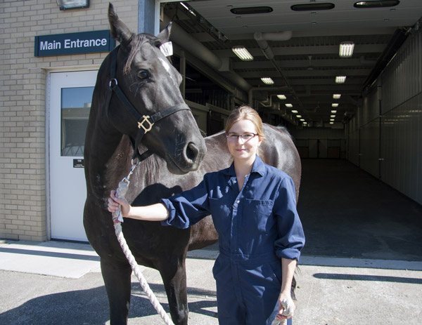 Kirsten Henderson spent last summer researching different tools for lameness diagnosis. Photo: WCVM Today.