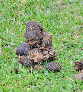 Do you know what your horse's dung normally looks like?