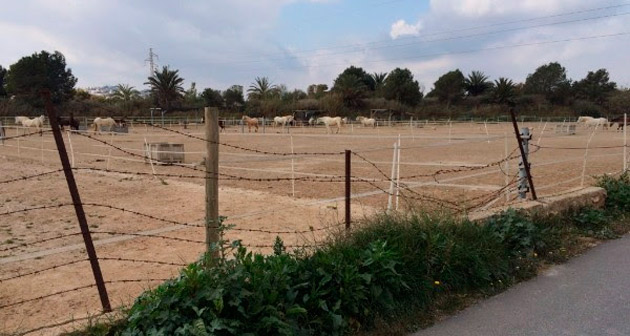 €13,000 has been raised in three months for a new fence for the Easy Horse Care Rescue Centre in Rojales, Spain.