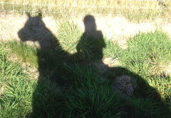 shadow-600-417