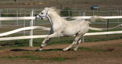 Owning and breeding a stallion requires commitment, time and discipline.