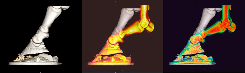 Models of a shod foot with packer comparing hoof deformation in walk (white) and trot (yellow)