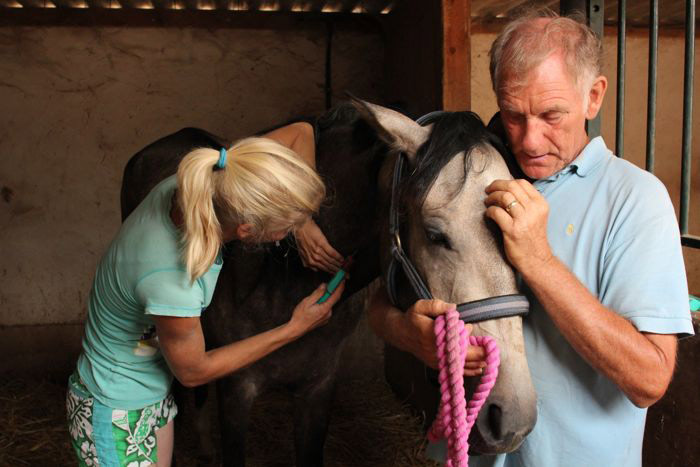Equine vet Dorothea and EHC co-founder Rod treating Lily.