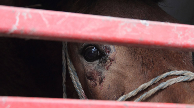 Pictures: World Horse Welfare