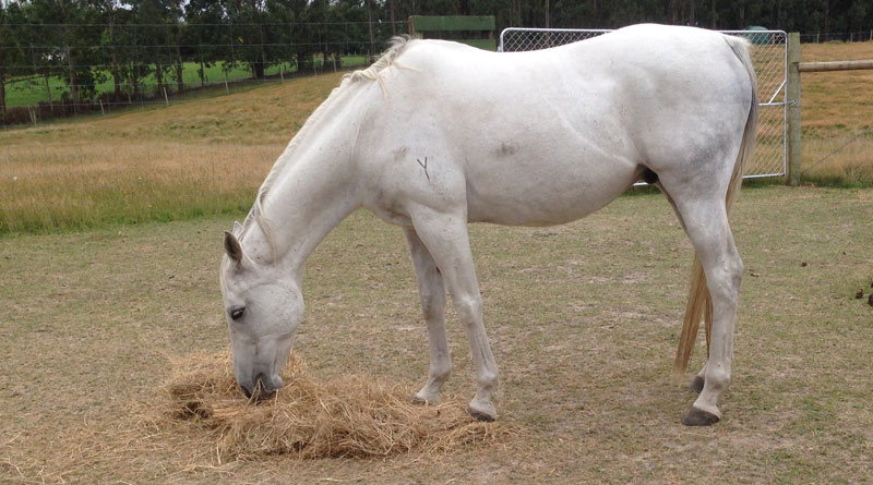 Keep the dieting horse separate from other horses so he doesn't eat his neighbor's portion, too.