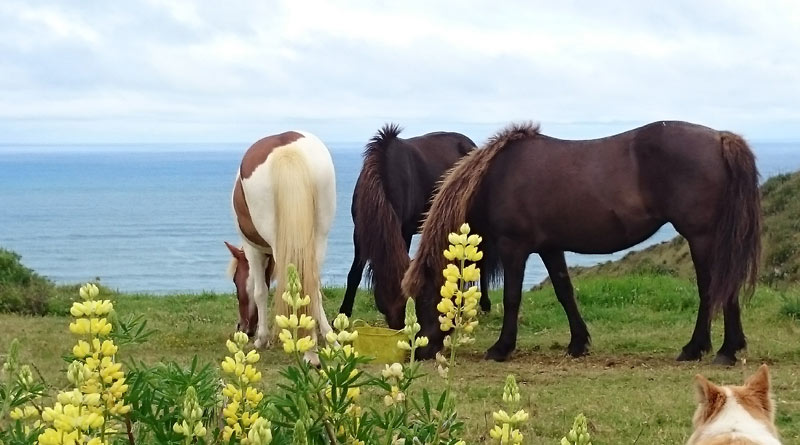 A stallion and two mares near Otaua, on New Zealand's West Coast.