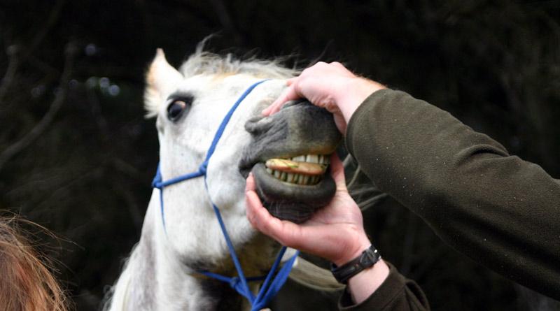 teeth-stock-800-445