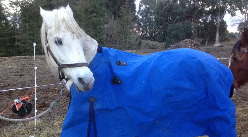 Horses Communicated Blanketing Choices In Norwegian Study Horsetalk Co Nz