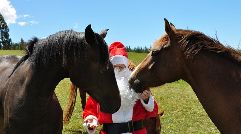 christmas santa 2 - Christmas Horse
