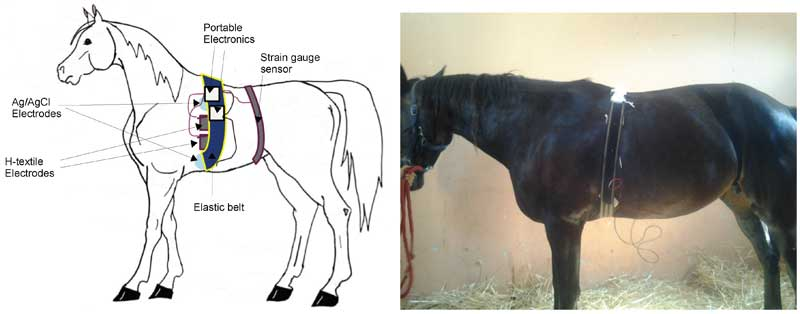 The systems placement on the horse. Image: Andrea Guidi et al