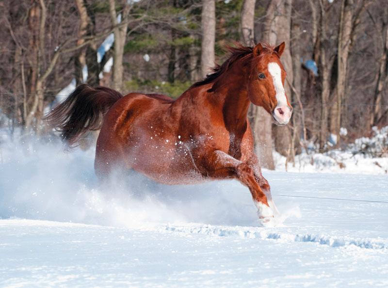 brookes snowy horse christmas cards - Horse Christmas
