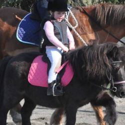 Pony Club Australia has moved to offer alternative physical activity, horse management training and connection for its 40,000 members during Covid-19 restrictions