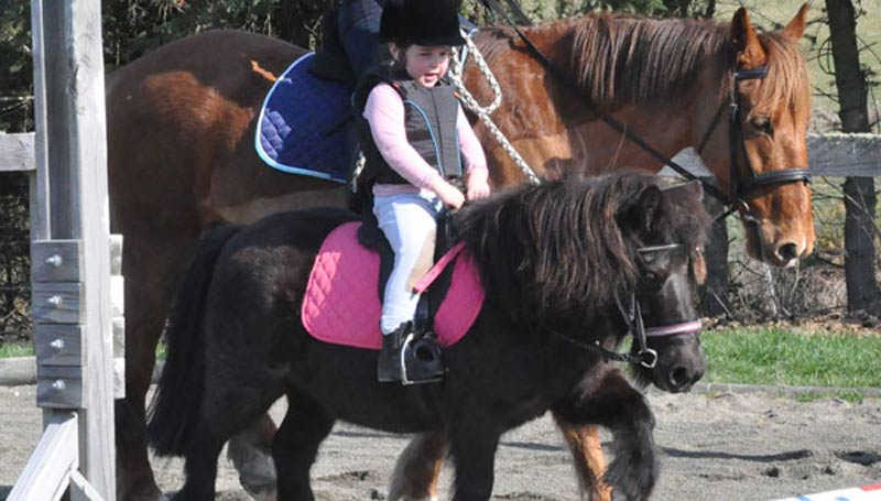 A child works her pony in an arena. Japanese research suggests riding can have cognitive benefits for children, as well as the widely acknowledged physical benefits.