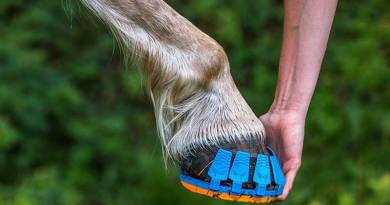 The shoes have a patent-pending fastening system. Photo: Megasus Horsetech GmbH