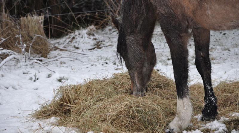 snow-hay-winter-800