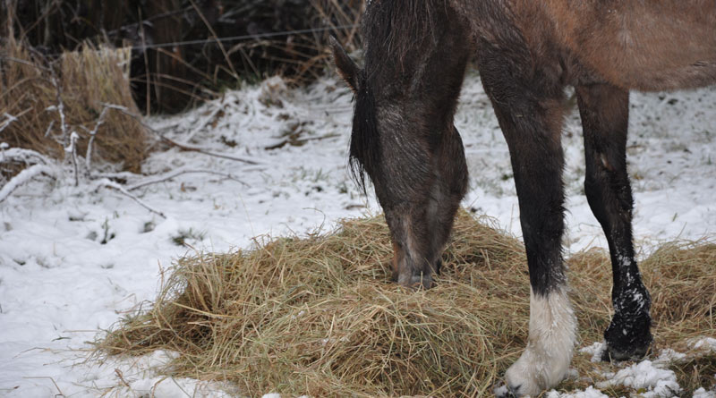 Do you know the origins of the hay you're feeding your horse?