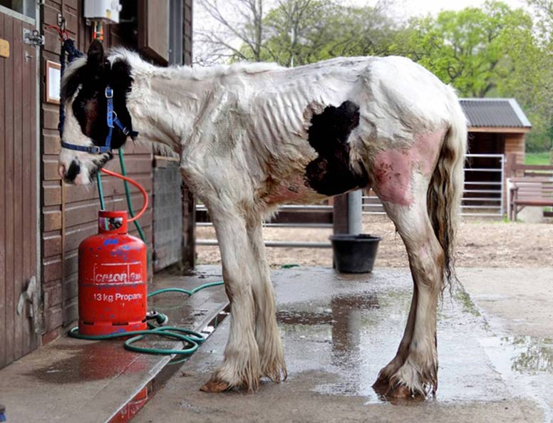 Bessie was in a very poor state when she was found.